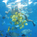 Maui Discount Snorkeling Tours