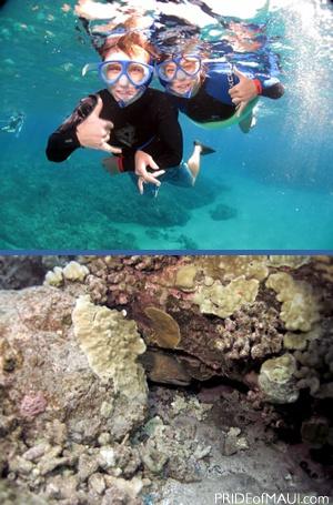 maui coral reefs