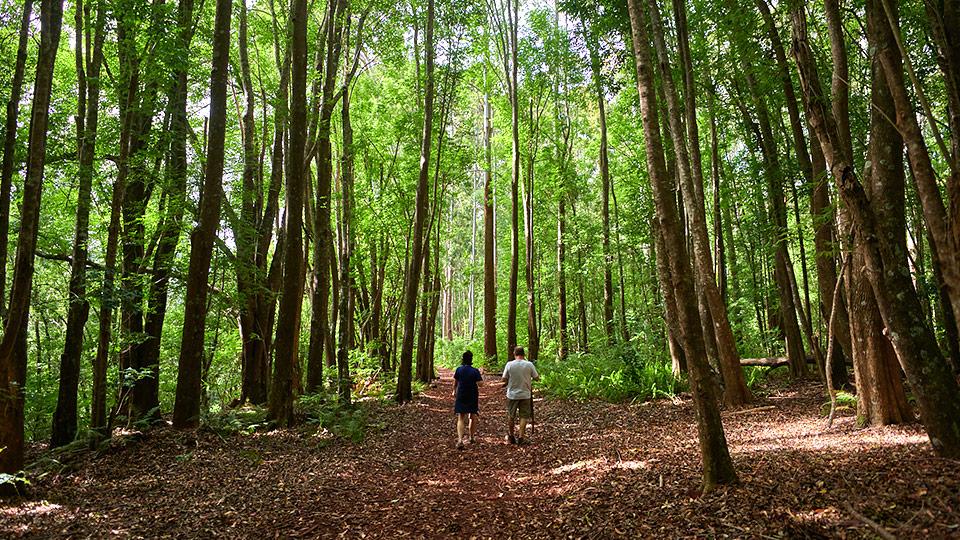 kahakapao trail