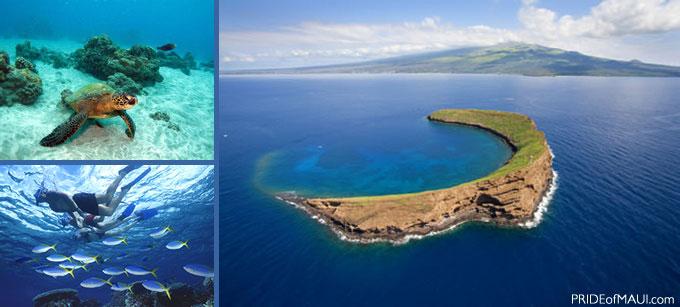 Snorkel Maui Molokini Molokini Crater Snorkeling