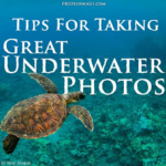 8 Tips For Taking Great Underwater Photos In Maui