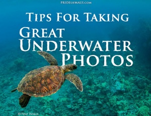 Tips For Taking Great Underwater Photos