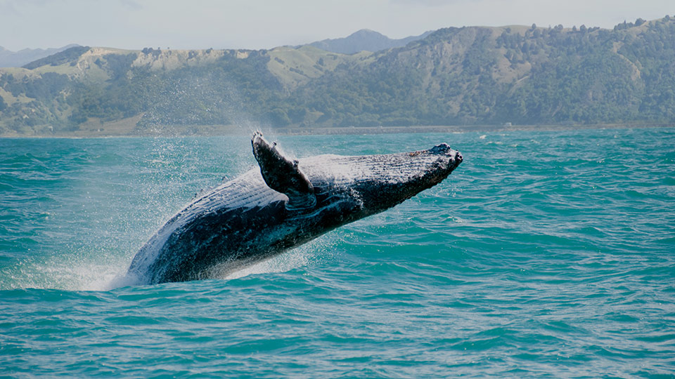 whale watching best activity
