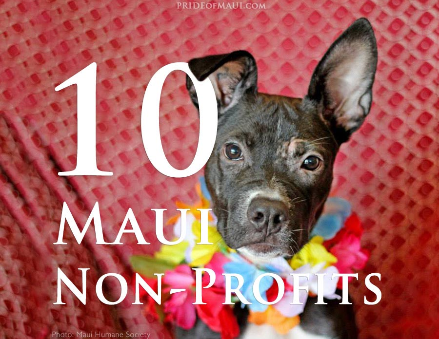Top Maui Non Profits