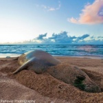 Top 10 Things To Do In Napili & Kapalua