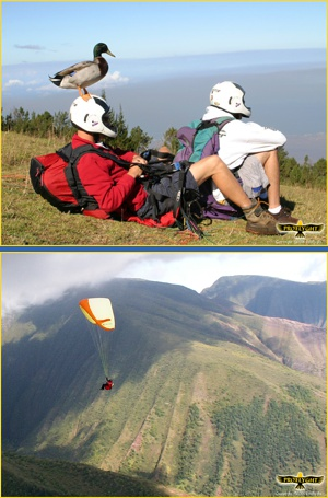 tandem paragliding maui