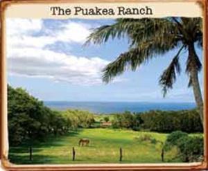 wedding locations hawaii