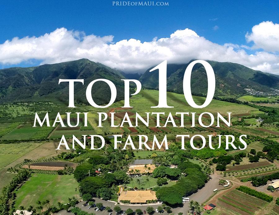 Maui Plantation and Farm Tours Infographic