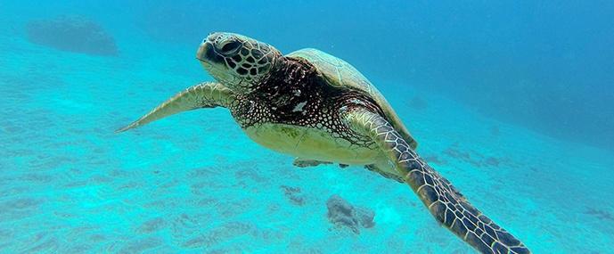 Turtle Town snorkeling