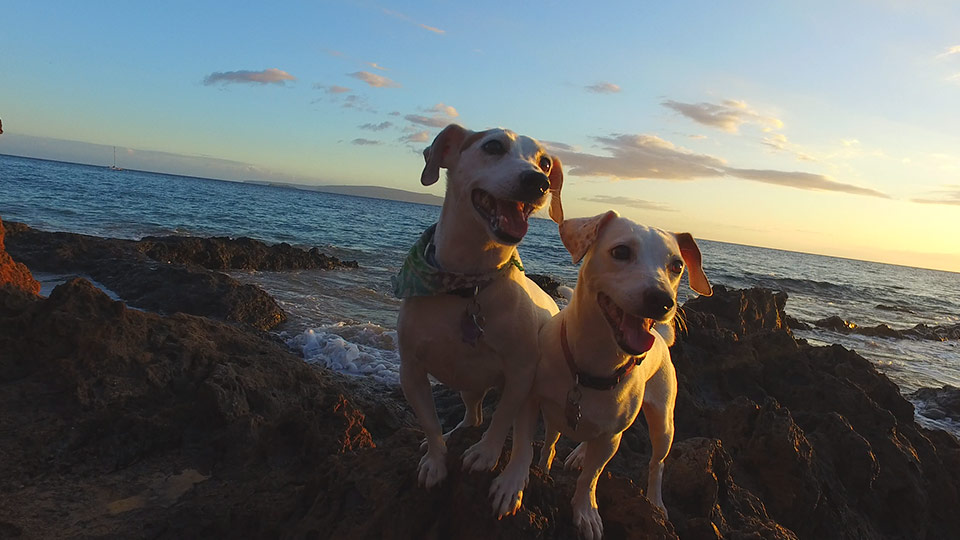Happy little dogs on the rocks at the beach.