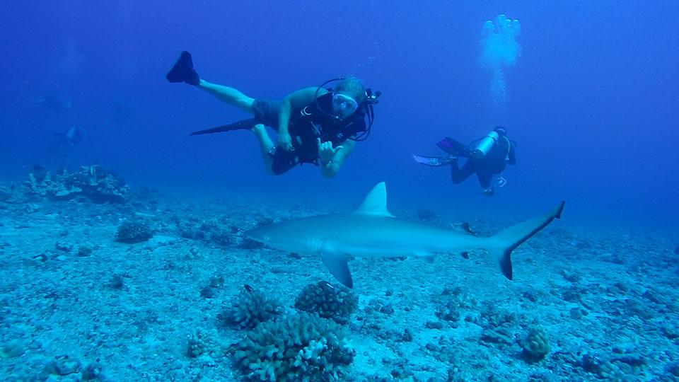 dive with sharks maui