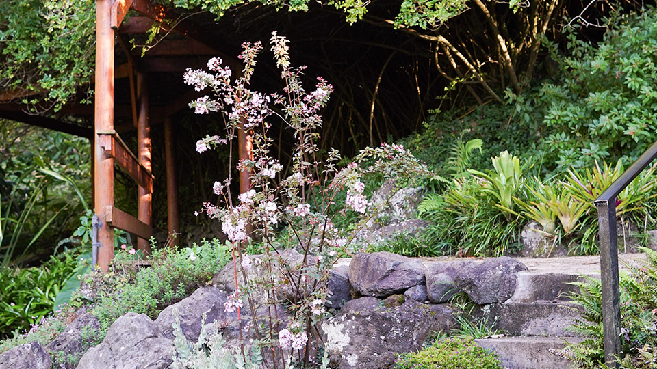 Kula Botanical Gardens