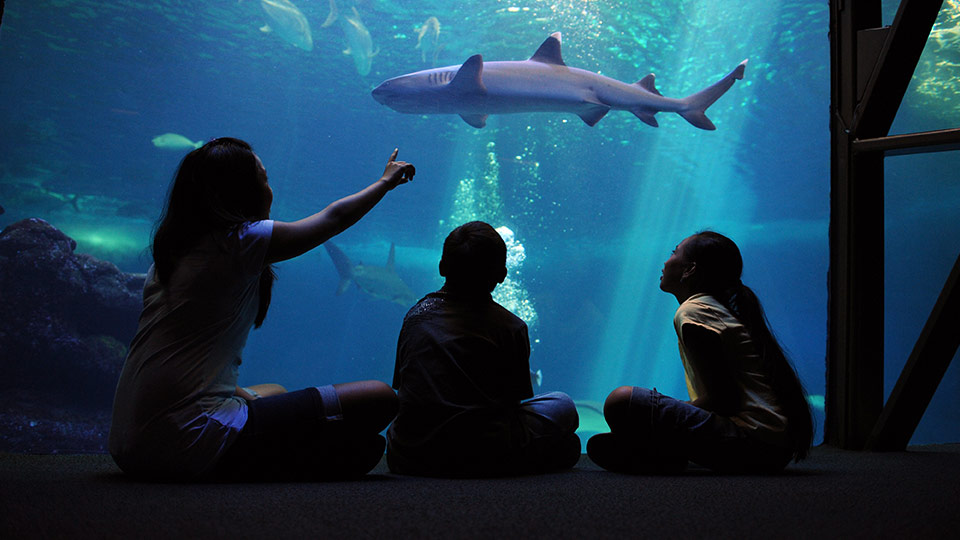children sitting with teacher in front of a huge aquarium with fish and shark