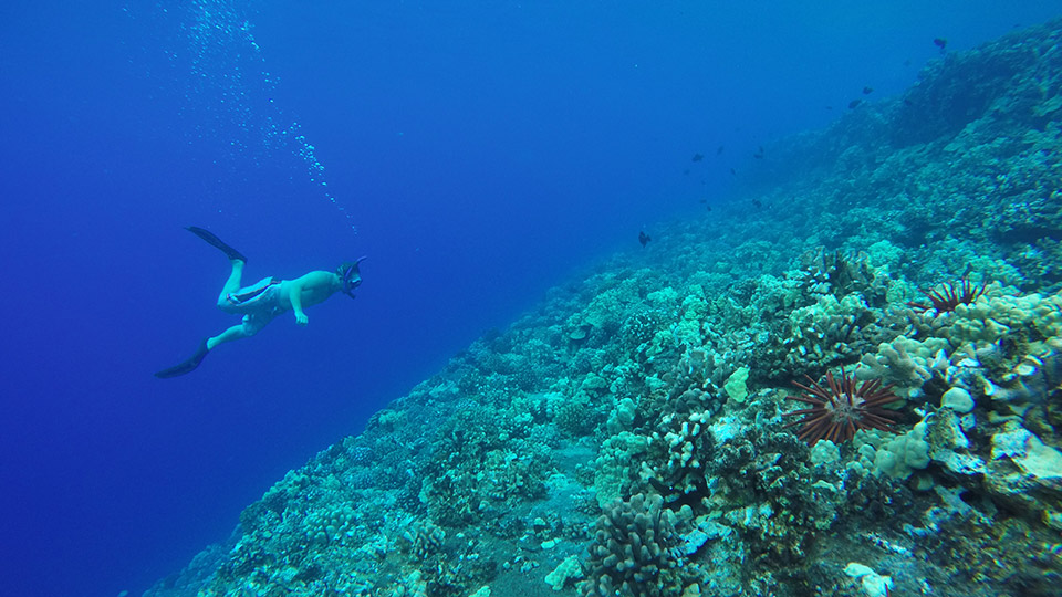 A Molokini Snorkel Tour Offers an Unforgettable Underwater Experience
