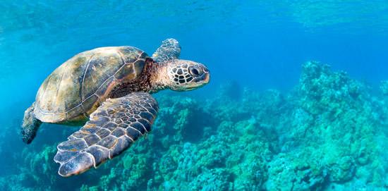 Turtle Watch Discount Snorkel