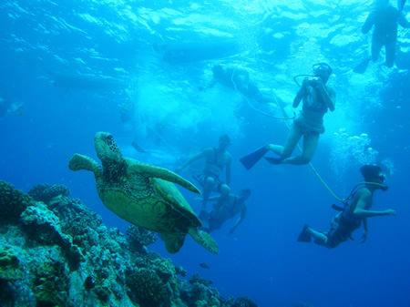 turtle snuba diving