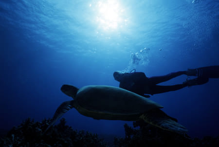 turtle town diving