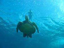 turtletown