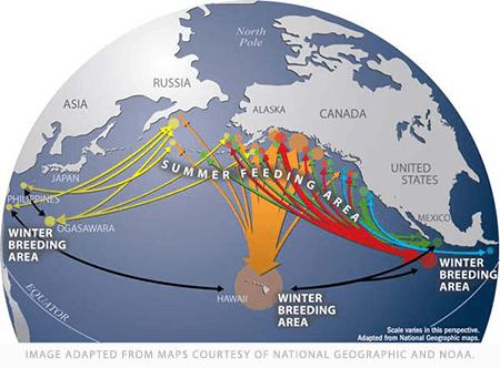 whale migration map