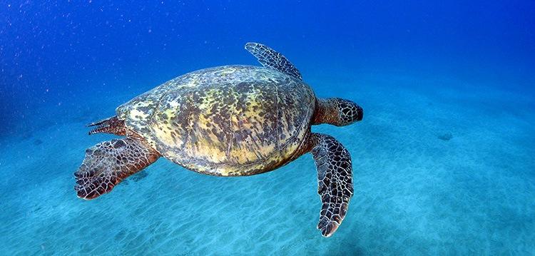 Turtles Tour