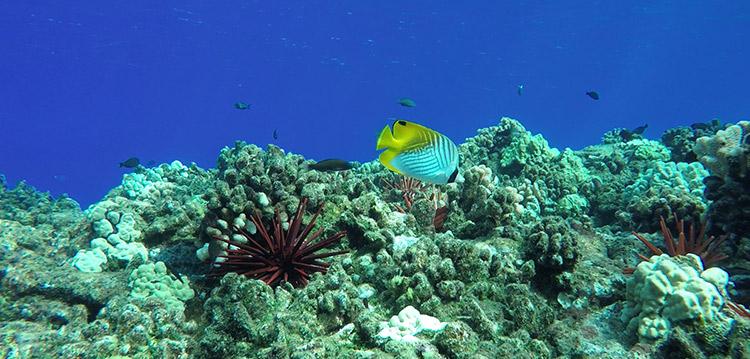 coral reef snorkel