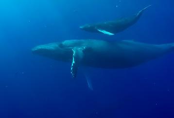 Best Maui Whale Watch Destination