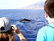 Best Maui Whale Watching Cruise