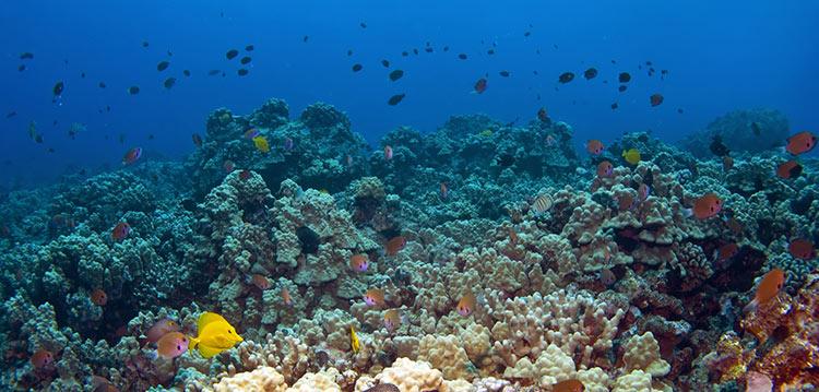 Maui Reefs
