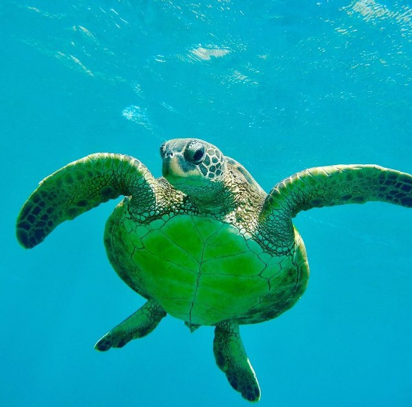 green turtle appetizer menu molokini snorkeling tour 1 maui snorkel boat trip to molokini