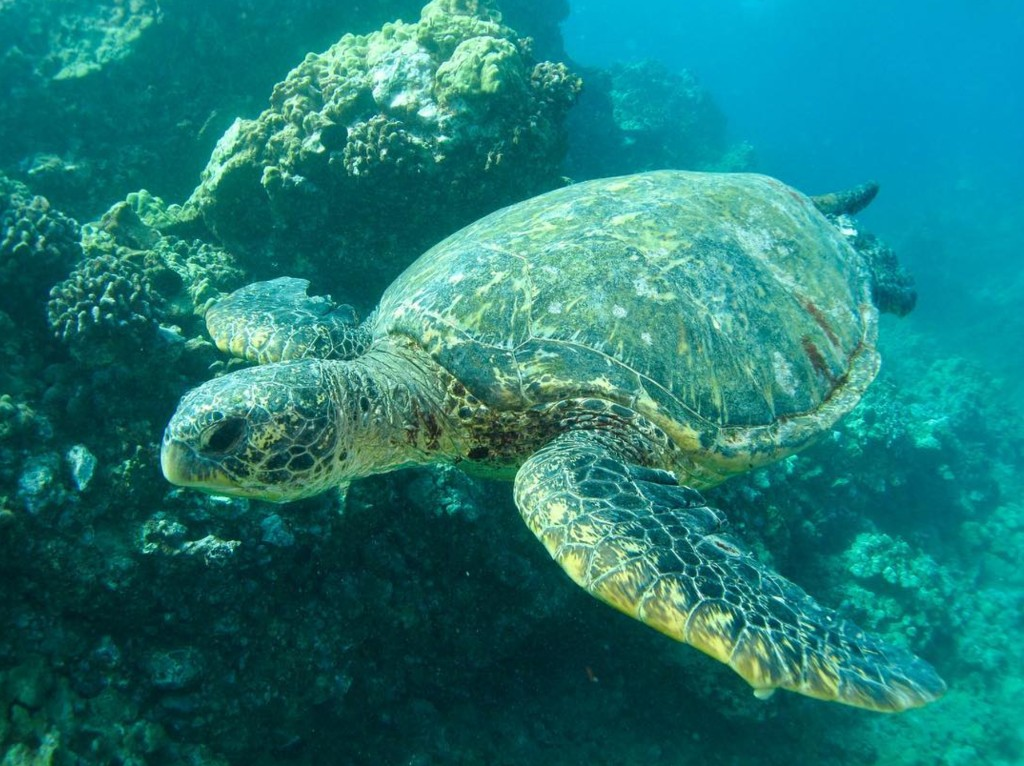 Best Family Snorkel Tour In Maui