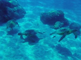 Best Underwater Sea Life Maui Coral Reef Snorkel Tour Olowalu