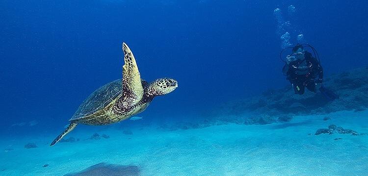 Best Maui Scuba Diving Turtle