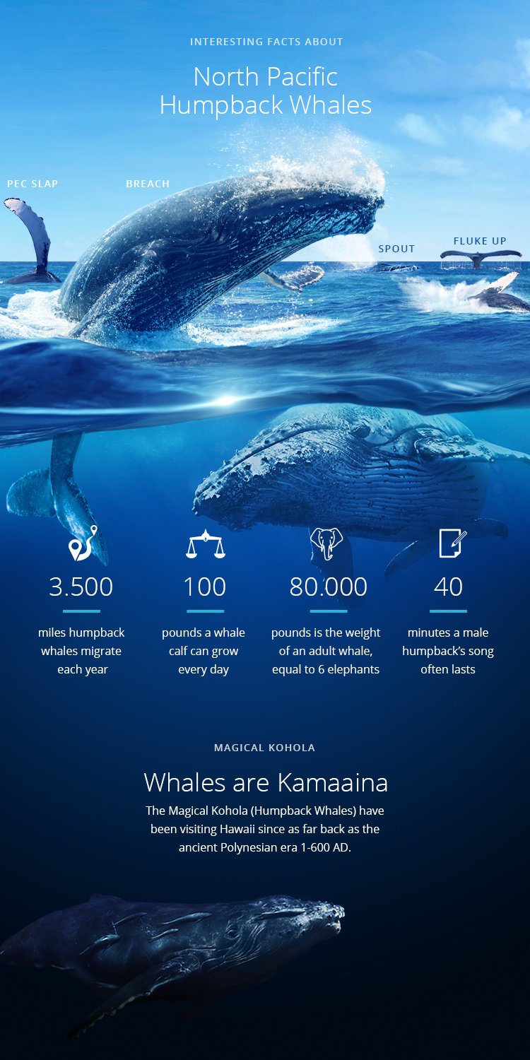 whale watching facts infographic