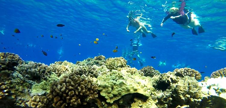 Snorkel Coral
