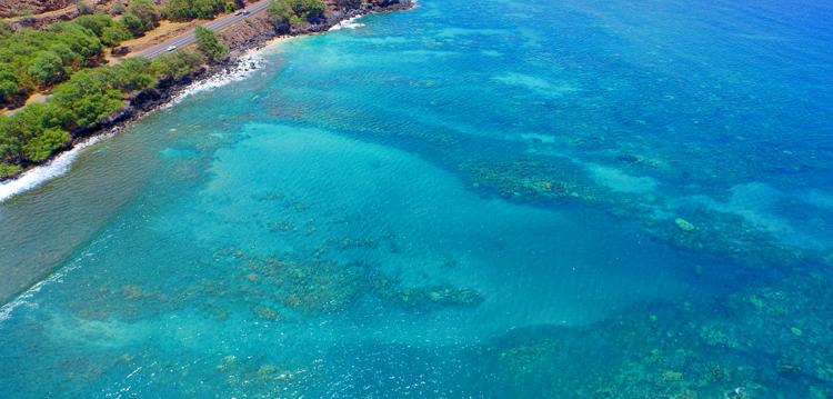 Top Maui Hawaii Snorkel Destination Coral Gardens