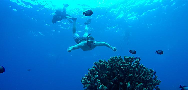snorkeler underwater at molokini