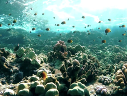 Best Maui Hawaii Molokini Snorkel Adventure Activity