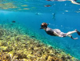 Snorkel Best Morning Molokini Tour
