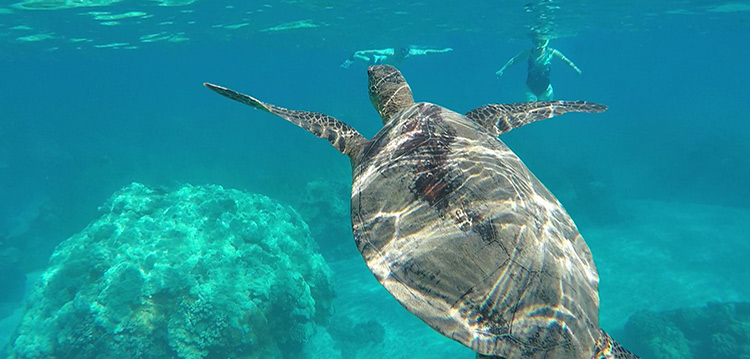 snorkeling at turtle town experience