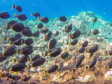 Maui Underwater Sea life Snorkel