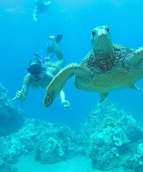 Maui Afternoon Turtle Town Snorkel Crusie