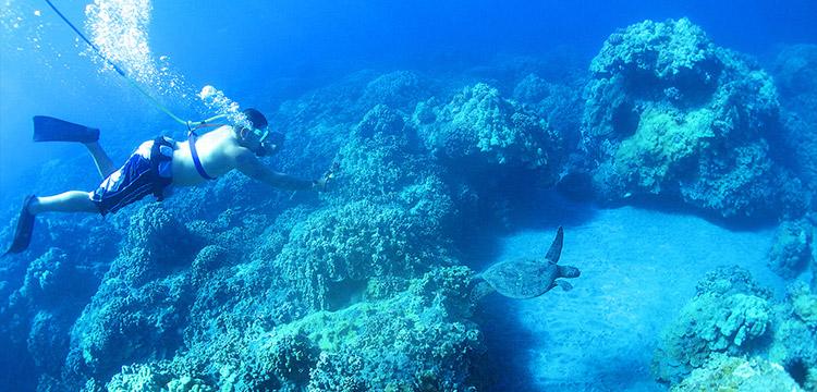 SNUBA diver and a sea turtle