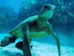 sea turtle marine life