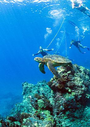 Best Maui Hawaii Snuba Adventure