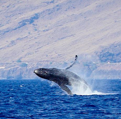 Maui Hawaii Top Whale Watching Tour