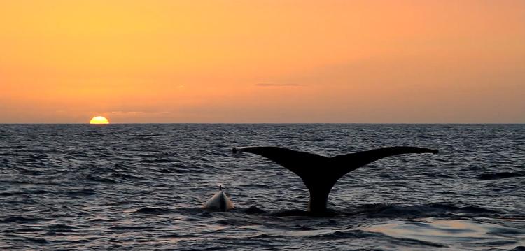 Maui sunset cruise