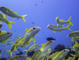 maui underwater sealife