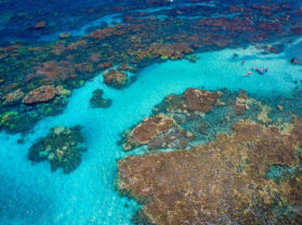 Adventure Snorkel Tour Maui Hawaii Coral Gardens