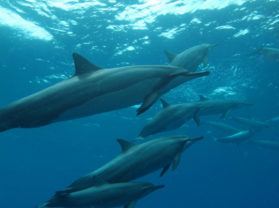 Best Maui Hawaii Dolphins Coral Gardens