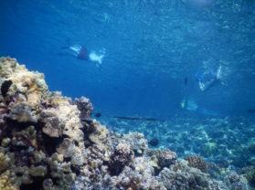 Maui Coral Reef Snorkeling Underwater Sea Life
